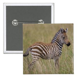 Baby Common Zebra, Equus burchelli 15 Cm Square Badge