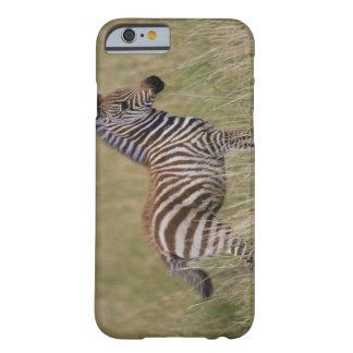 Baby Common Zebra, Equus burchelli Barely There iPhone 6 Case