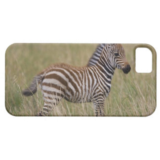 Baby Common Zebra, Equus burchelli Case For The iPhone 5