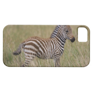 Baby Common Zebra, Equus burchelli iPhone 5 Cases