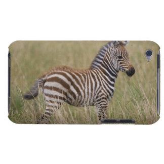 Baby Common Zebra, Equus burchelli iPod Touch Case