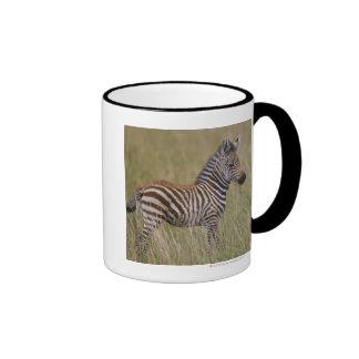 Baby Common Zebra, Equus burchelli Coffee Mug