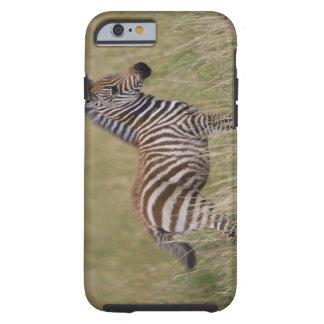 Baby Common Zebra, Equus burchelli Tough iPhone 6 Case