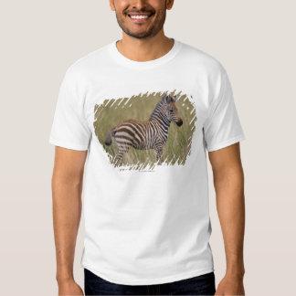 Baby Common Zebra, Equus burchelli Tshirts