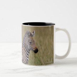 Baby Common Zebra, Equus burchelli Two-Tone Coffee Mug