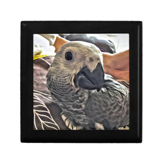 Baby Congo African Grey Parrot Gift Box