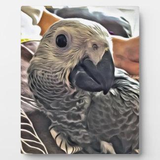 Baby Congo African Grey Parrot Plaque