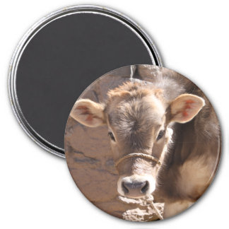Baby Cow - Brown Baby Calf Close Up Face Fridge Magnet
