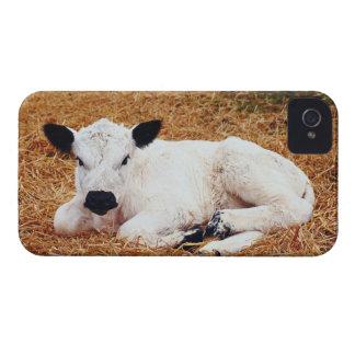 Baby Cow, Calf iPhone 4 Case-Mate Case