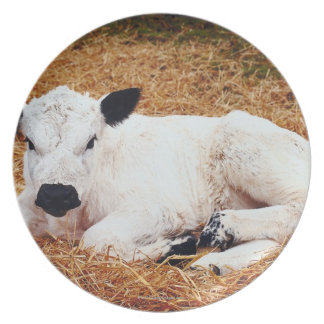 Baby Cow, Calf Party Plate