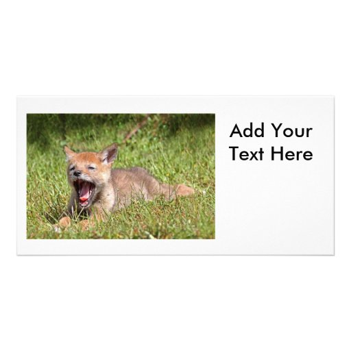 Baby Coyote Yawning Picture Card