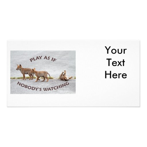 Baby Coyotes Playing Picture Card