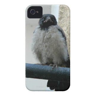 Baby crow iPhone 4 Case-Mate case