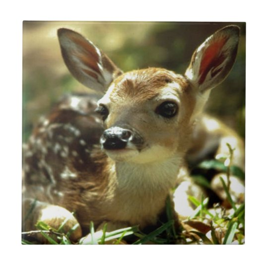 Baby Deer gifts Small Square Tile
