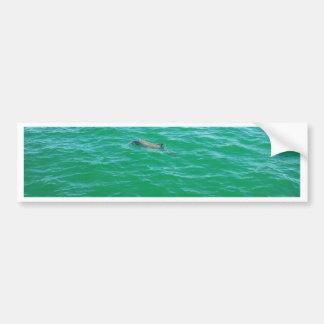 baby dolphin bumper sticker