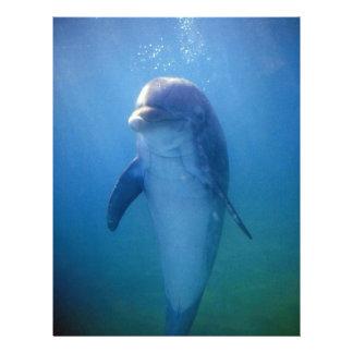 Baby dolphin La Havana Aquarium Cuba Personalized Flyer