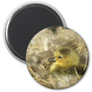 Baby Duck Refrigerator Magnets