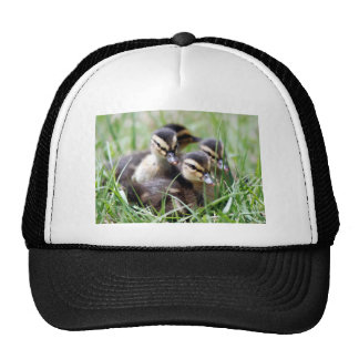 Baby Ducks Cap