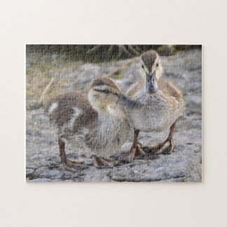 Baby Ducks Jigsaw Puzzle