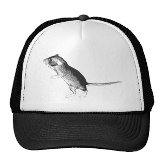 Baby dumbo rat cap