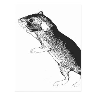 Baby dumbo rat postcard