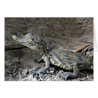 Baby dwarf crocodile cards