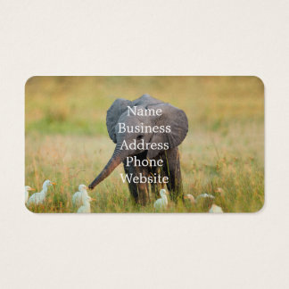 Baby Elephant and Birds Business Card