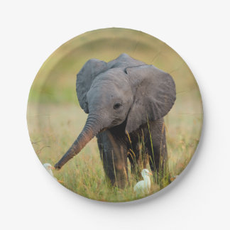 Baby Elephant and Birds Paper Plate