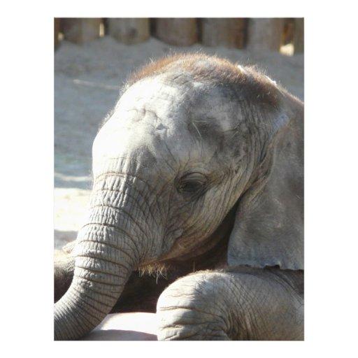 baby elephant flyers
