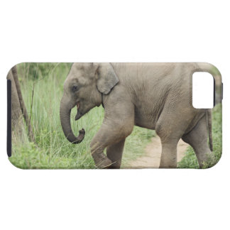 Baby Elephant following the mother,Corbett iPhone 5 Case