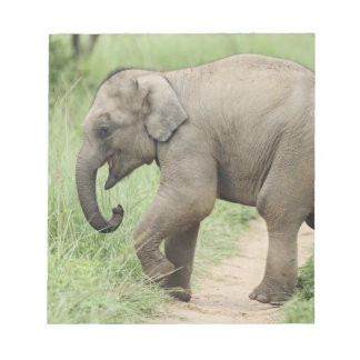 Baby Elephant following the mother,Corbett Notepad
