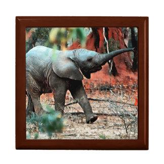 Baby Elephant Gift Box