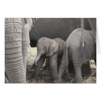 Baby elephant is standing and wobbly card