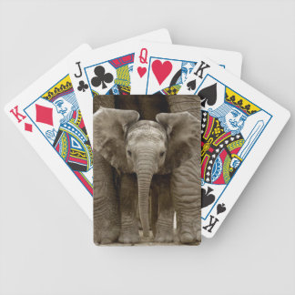 Baby Elephant Playing Cards