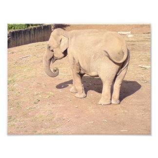Baby Elephant Print 10x8.5