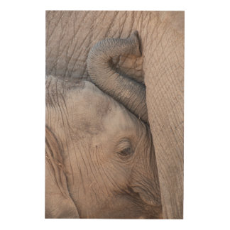 Baby Elephant Snuggles Wood Print
