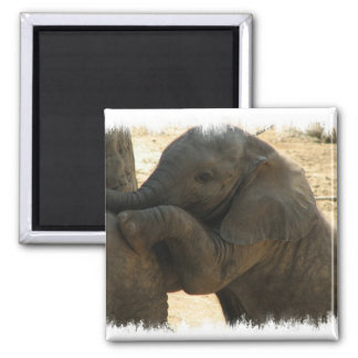 Baby Elephant Square Magnet