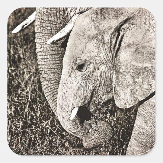 Baby elephant square sticker