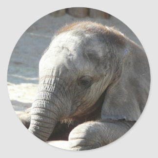 baby elephant round sticker