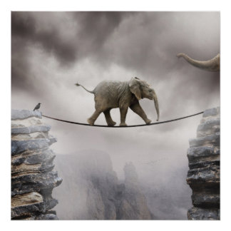 Baby Elephant Walks The Tightrope Poster