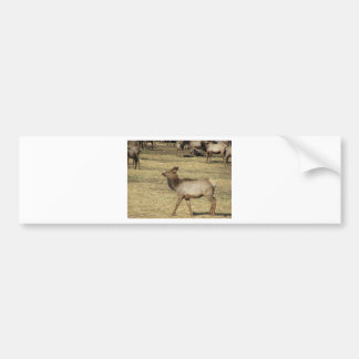 Baby Elk Bumper Sticker