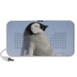 Baby Emperor Penguin, Snow Hill Island Laptop Speaker