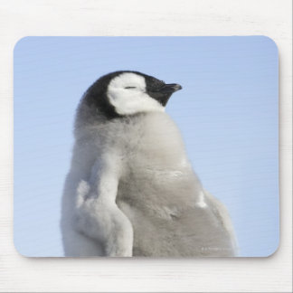 Baby Emperor Penguin, Snow Hill Island Mouse Mat