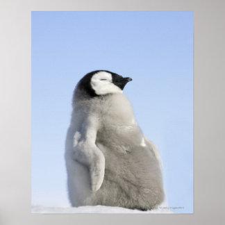 Baby Emperor Penguin, Snow Hill Island Poster