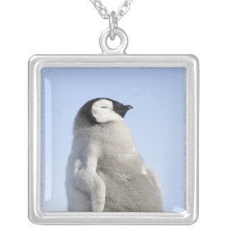 Baby Emperor Penguin, Snow Hill Island Silver Plated Necklace
