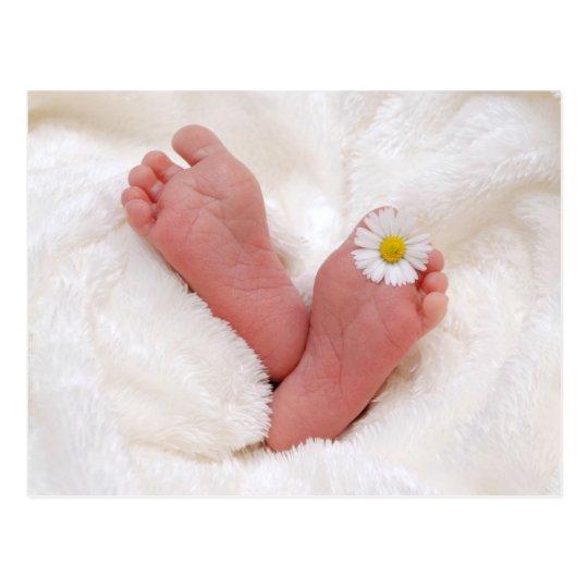 Baby Feet With Daisy Postcard