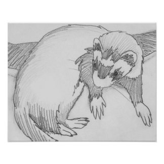 """Baby"" Ferret Drawing Poster"