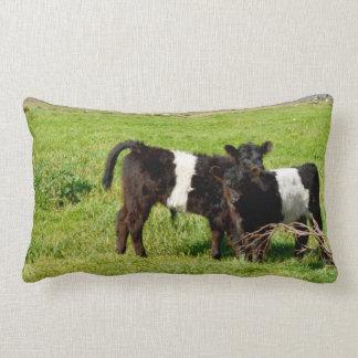 Baby Galloway Calves, Lumbar Cushion
