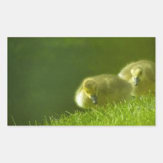 Baby Geese Rectangular Sticker