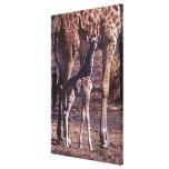 Baby giraffe and mother, Tanzania Canvas Print